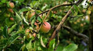 Uzbekistan chce likwidować nieefektywne ekonomicznie sady i winnice