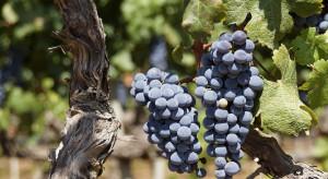 15.01. mija termin składania deklaracji dotyczących rynku wina