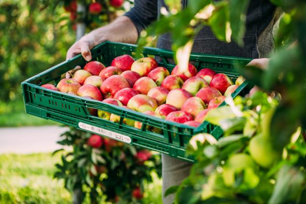 Netto wprowadza skrzynie wielokrotnego użytku na owoce i warzywa