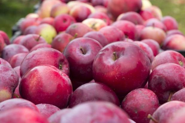 ZSRP opublikowało odpowiedź MRiRW ws. importu jabłek z Ukrainy