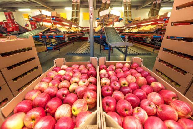 Owoc Sandomierski wciąż szuka właściciela. Cena spadła do 22 mln zł