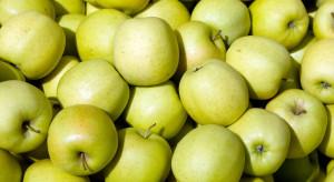 Eksporter: przechowywanie jabłek w chłodniach przez dłuższy czas nie jest opłacalne w tym sezonie