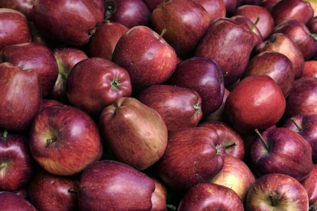 Utrzymuje się wysokie tempo sprzedaży jabłek do Egiptu