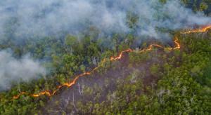 """Australia: udało opanować się """"wielki pożar""""; synoptycy zapowiadają deszcze"""