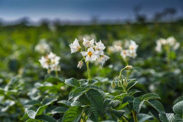 GUS przeprowadzi badania rolnicze od 15 do 31 styczna 2020 r.