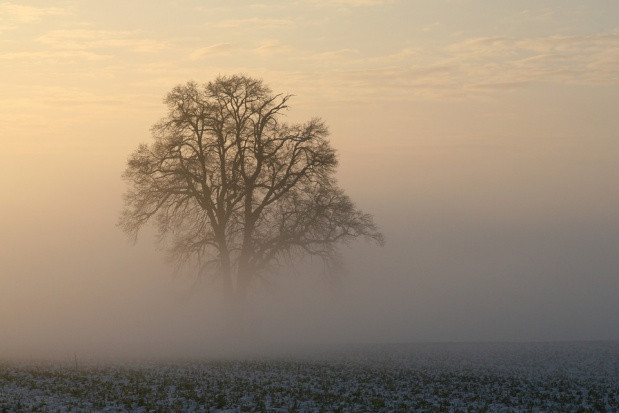 IMGW: gęsta mgła w ośmiu województwach