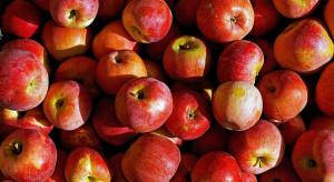 Bronisze: jabłka z chłodni kontrolowanych - 3-5 zł/kg