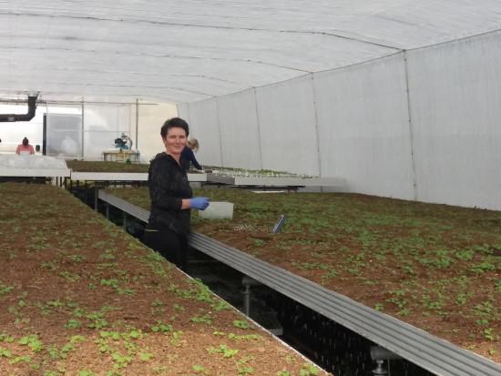 Rośnie zainteresowanie uprawą nowych odmian malin (wywiad+zdjęcia)