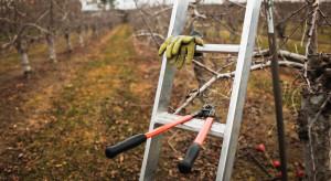 Cięcie sadów – mechanizacja a koszty