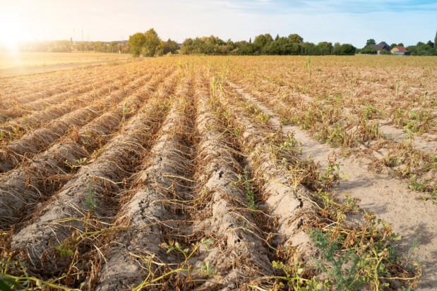 Badania wykazują intensywną suszę rolniczą. Wiosną może być tak samo