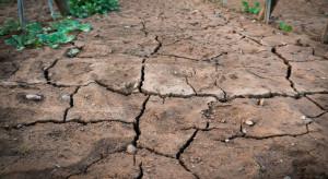 Łagodna zima i susza martwią sadowników. Co przyniesie wiosna?