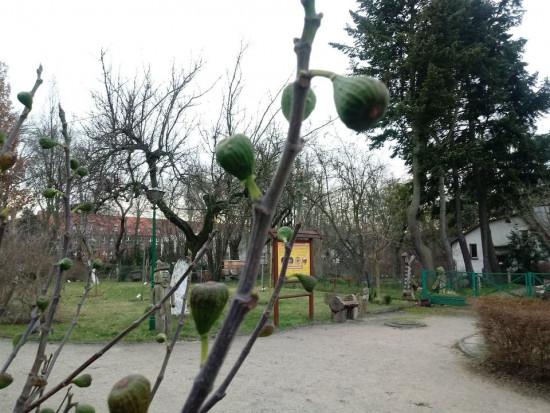 W Ogrodzie Botanicznym w Bydgoszczy pojawiły się kwiaty i pierwsze owoce