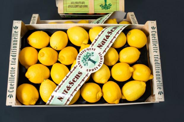 MAKRO Polska wprowadza owoce cytrusowe bez środków chemicznych