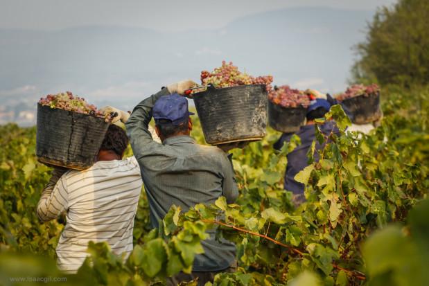 Francja: poprawiła się sytuacja ekonomiczna rolników, głównie uprawiających winorośl