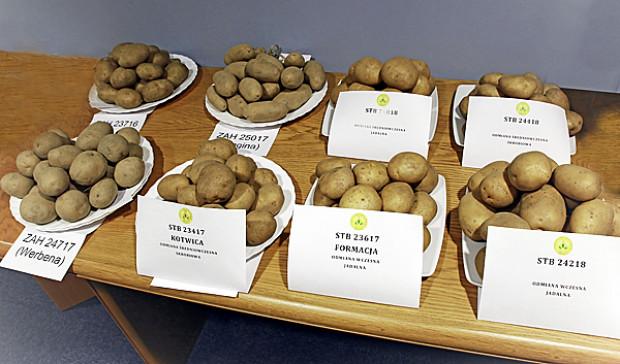 COBORU: Pięć nowych odmian ziemniaka w Krajowym rejestrze