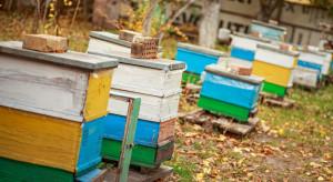 Nietypowo ciepła pogoda wpływa na stan rodzin pszczelich