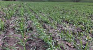 Prof. Doroszewski z IUNG: pogoda na razie nie szkodzi uprawom polowym