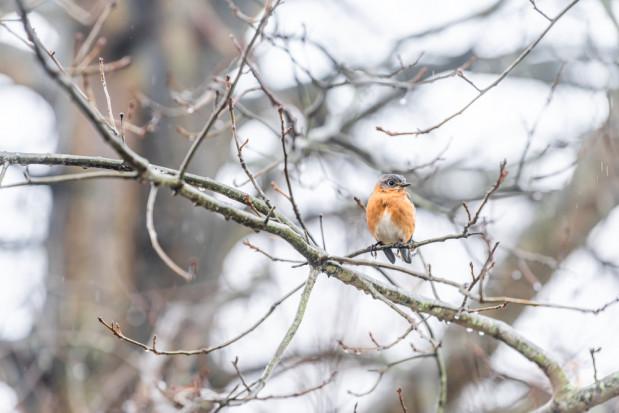 Synoptycy zapowiadają deszcz, śnieg, gołoledź oraz porywisty wiatr