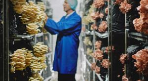 Tesco: Nietypowe grzyby zdobywają popularność w Wielkiej Brytanii