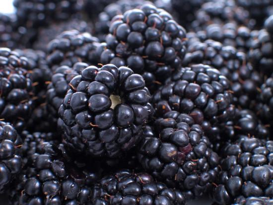 Alpine Fresh wprowadza na rynek nową odmianę jeżyny