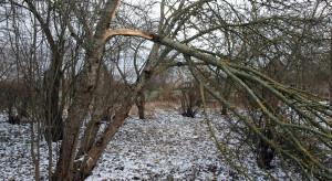 IMGW ostrzega przed silnym wiatrem w wybranych powiatach czterech województw