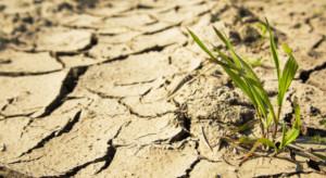 Małe opady mogą spowodować suszę najsilniejszą od 50 lat