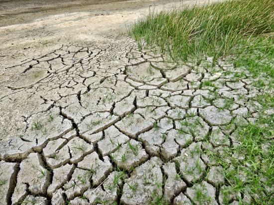 IUNG: Suszę rolniczą notujemy praktycznie co roku od 39 lat