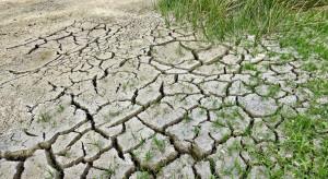 Susza rolnicza występuje praktycznie co roku od 39 lat