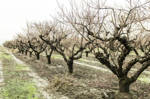 Brak śniegu może doprowadzić do suszy wiosną (video)