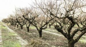 Od kilku lat znikome opady śniegu pogłębiają problem suszy (video)
