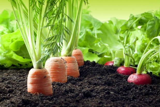 Producenci żywności jedną z grup najbardziej wpływających na środowisko