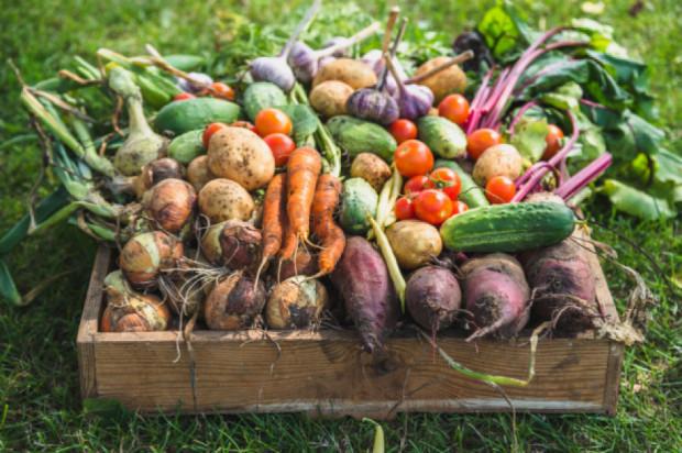 W Polsce rośnie liczba przetwórni ekologicznej żywności