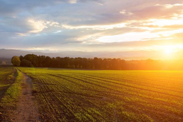 Ukraina kontynuuje prace nad kontrowersyjną ustawą o ziemi