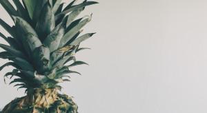 Polski start-up produkuje wegańskie buty z...owoców