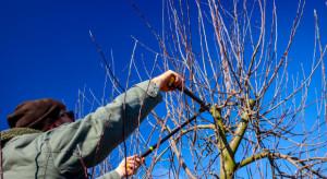Gm. Opole Lubelskie: 61-latek spadł z platformy sadowniczej w czasie cięcia drzew