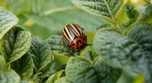 60. Sesja IOR-PIB: Szkodniki coraz bardziej odporne na insektycydy (wideo)