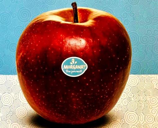 Morgana - 4 kraje promują nową odmianę jabłek