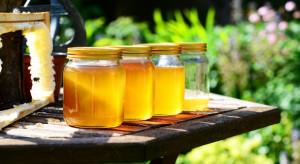 Pszczelarze z UE domagają się zaostrzenia kontroli miodów z importu