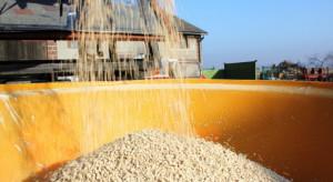 Rynek nawozów mineralnych i ceny w styczniu 2020 - analiza CDR Brwinów