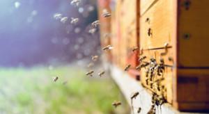"""W Kotlinie Kłodzkiej powstają """"hoteliki i ogrody"""" dla dzikich pszczół"""