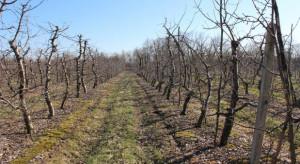 Wysokie temperatury w styczniu zakłócały spoczynek roślin