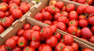 Turcja chce zlikwidowania kwot ograniczających eksport pomidorów do Rosji