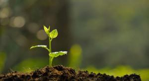 PIORiN przypomina o zgłoszeniach do integrowanej produkcji roślin
