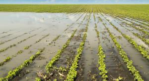 ARiMR dofinansuje inwestycje chroniące przed ASF i powodzią
