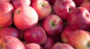Rynek jabłek: nasilająca się presja podażowa skutkuje wzrostem cen (analiza)