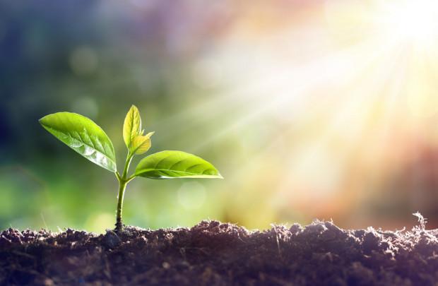 Prezydent podpisał ustawy dotyczące zdrowia roślin