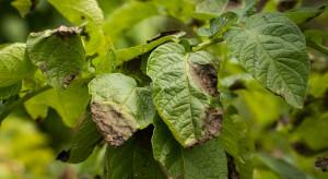 Wykrycie chorób roślin za pomocą kamery HCC