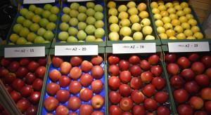 Jakimi odmianami jabłoni interesują się sadownicy? (zdjęcia)