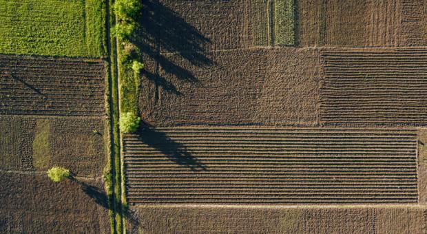KOWR: W ub.r. wydzierżawiono 44,3 tys. ha ziemi