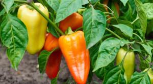 COBORU: 40 nowych odmian roślin warzywnych